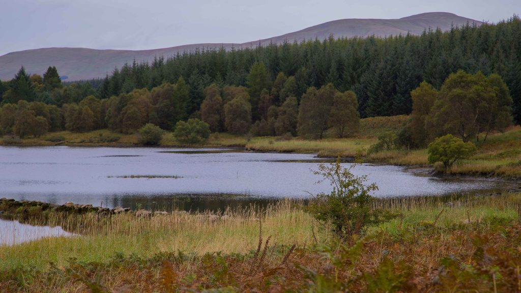 Carsphairn Community Woodland